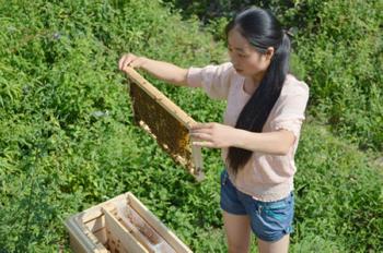 女大学生村官养蜜蜂 传授经验农户收入增