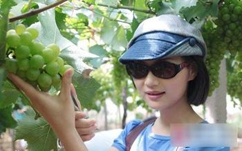 """长兴有个""""吐鲁番"""" 葡萄质量不一般"""