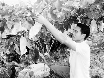 农业观光垫江好 硕士返乡种葡萄