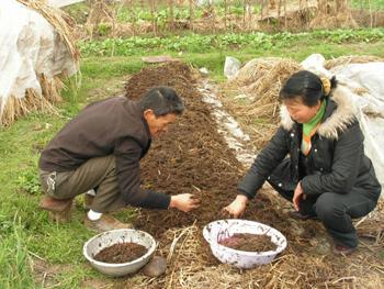 地里牛粪种蚯蚓 掌握科技土生金