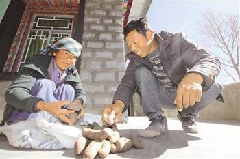 西藏老鼠土豆 皮红果小好肉