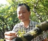 广西容县铁皮石斛:年产值6亿仙草让农户发家致富