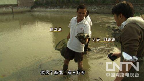 [致富经]赔光家产后靠甲鱼翻身(20140221)