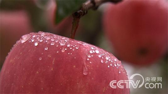 [致富经]赢在未来——农产品电商崛起 第二集 产品的故事