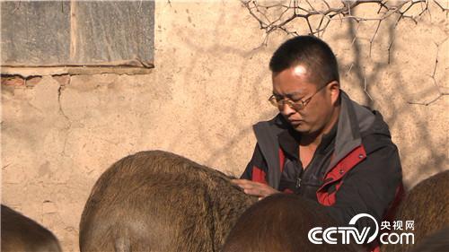 致富经:莽汉养<a href=https://www.zhifujing.org/special/yezhu/ target=_blank class=infotextkey>野猪</a> 一错再错之后 12月27日