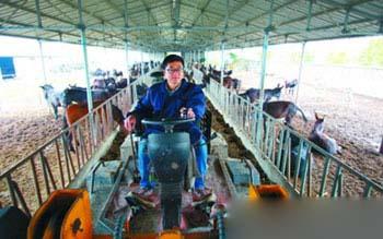 给驴儿上饲料如今已经是机械化操作了。