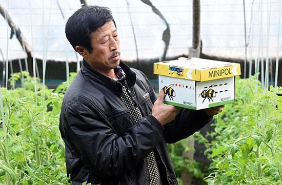 12月23日,河北省永清县北辛溜乡佃庄村村民在查看荷兰熊蜂的归巢情况。