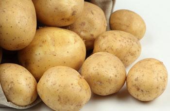 转基因土豆