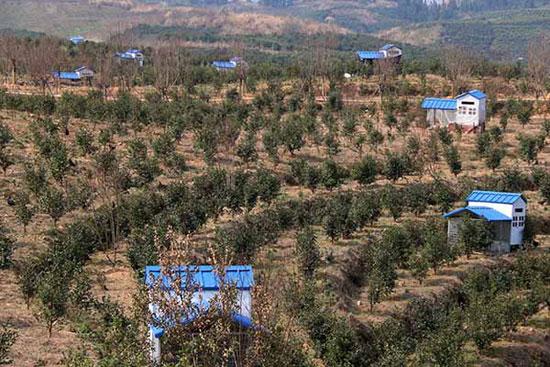 """3月2日在贵州黔东南黎平县拍摄的高屯现代农业园区油茶基地里的鸡""""别墅""""。"""
