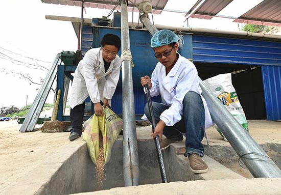 6月2日,山西省吕梁市临县兔坂镇砖瓦村村主任武雪峰(左)和鸡场工作人员一起搅拌鸡饲料。