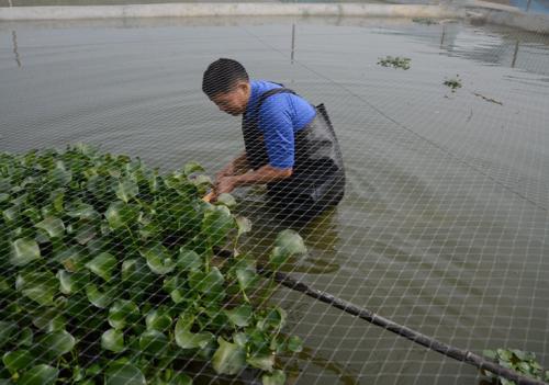 湖南尹显座返乡创业养泥鳅成功致富