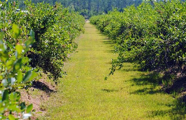 休闲农业发展趋势
