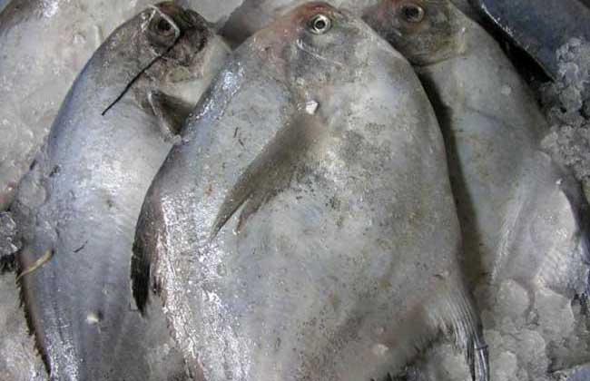 台湾黑鲳鱼代价比白鲳鱼省钱近两倍 很受消费者