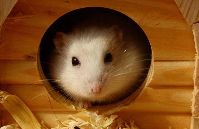 仓鼠价格多少钱图片